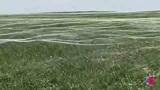 蛛网遍布草原 微风吹过如同湖面涟漪