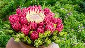 世界上花期最长的花!花期寿命超过100年,象征着富贵吉祥