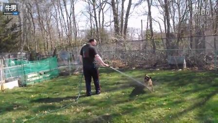 德国牧羊犬开心玩水兴奋狂奔