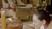 电影《租赁猫》温情上映 荻上直子让你告别孤单