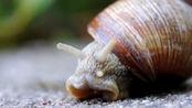 牙齿最多的动物,还没有手掌大的身体里,拥有超过一万四千颗牙齿