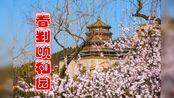 春到颐和园,放飞在西提,桃花朵朵