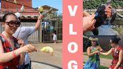 Miss Ji:在夏威夷撸海龟、摸海星、逗鸟逗海豚,跳民族舞 (民族晚宴,夏威夷VLOG6)