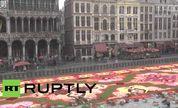 """壮丽 比利时75万朵秋海棠铺就巨型""""花毯"""""""