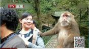 """新闻万象·热议:游玩峨眉山 被导游收取15元""""猴子险"""""""