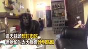 """80kg高加索犬想讨肉肉吃 怕吵到马麻""""气音""""喊:阿母-几件小事-几件小事"""