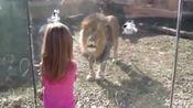 当蠢萌小萝莉,遇到高智商动物时