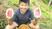 小六种小瓜,瓜如其人浓缩就是精华,西瓜虽小但却很甜