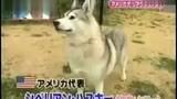 """狗狗 """" 180电影网电影 www.dy180.com/"""