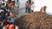 另类风俗!印度举行扔牛粪大战,谁身上的牛粪越多代表越幸运