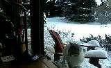 两笨猫隔窗互殴-宠物搞笑视频在线看