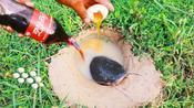 暴雨过后,男子向沙坑内猛灌可乐和鸡蛋,里面的家伙乖乖就范!
