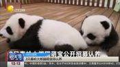 3只秦岭大熊猫萌宝待认养