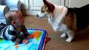 萌宝宝和萌犬 欢乐在一起