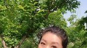 河南省豫剧院二团邵文霞演唱《拷红》中红娘的唱段