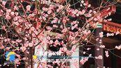 【拥抱春天】暗香浮动!济南趵突泉、五龙潭梅花盛放