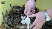 随大流的都吃阳澄湖大闸蟹,老饕都去找太浦河大闸蟹了。