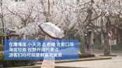 江西庐山今冬雾凇首秀