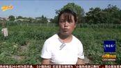 西安:600个西瓜一夜被砍烂
