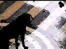 不能更2了的拉布拉多 拉布拉多猎犬价格 http://www.52mingquan.com/