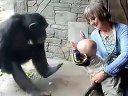 视频: 黑猩猩想表达对婴儿的不满sz.landtu.com