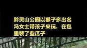 """女子逛公园遇""""山大王"""",花2块5看猴3万元包被抢走"""