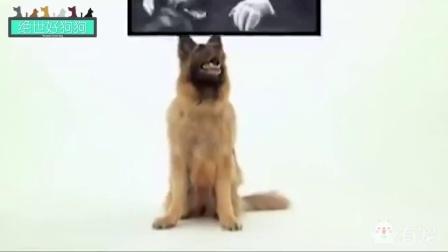绝世好狗狗之德国牧羊犬