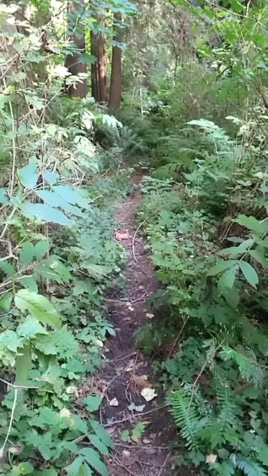 附近小溪的步道