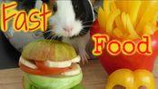 动手为荷兰猪做美食系列之6——快餐【Fast Food For Guinea Pigs】