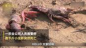 尸横遍野,熊孩子毒死了千斤小龙虾!吃货和虾农一起在哀嚎