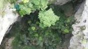 壮观!广西发现世界级大型天坑群:19个天坑组成 坑底发现珍稀植物