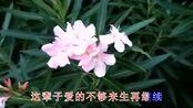 李智英/蓝玫瑰一首《今生有缘和你在一起》好听极了,醉人心扉!