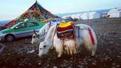 西藏美丽景色迷人之二