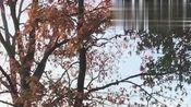 这是我在德国深秋里见过最美的背影,祝愿世间一切美好!