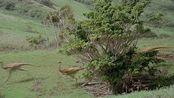 侏罗纪公园3:饥饿的霸王龙捕食,几乎是一口一只小怪