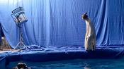 陈凯歌《妖猫传》幕后花絮,刘昊然为了拍出唯美效果一次次跳水