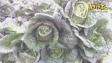 蔬菜-冷燕双飞