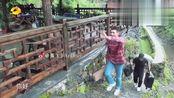 综艺片段:陈飞宇何蓝逗做客蘑菇屋,居然还自带了颗黄杨树!