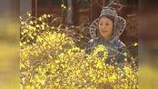 《康熙王朝》胤褆爱意遭拒绝,没看上你