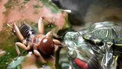 巴西龟VS蟋蟀,冷静中的杀手