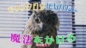 警视厅生物系 第八集预告 桥本环奈、渡部笃郎