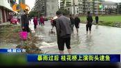 暴雨过后 桂花桥上演街头逮鱼!