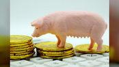 """12月3日猪价行情:猪价""""火箭式""""上涨,北方猪价可能再现下跌"""