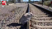 醉汉将百斤重大石头推上铁轨,79岁大爷狂奔成功救下一辆火车