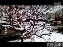 [拍客]北京初春之雪