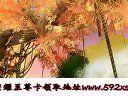 诛仙2荣耀之路新手卡领取地址http:www.592xsk.com