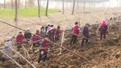 37秒 春光无限好,植树正当时!枣庄台儿庄今年计划造林1万亩