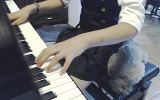 【钢琴】孜达|梦中的婚礼重置+未闻花名-秘密基地