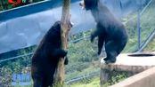 四川碧峰峡景区被确定为国家5A旅游景区!