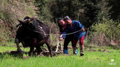 春耕时节又开始了,千百年的农耕文化、古朴的民风、浓浓的乡愁